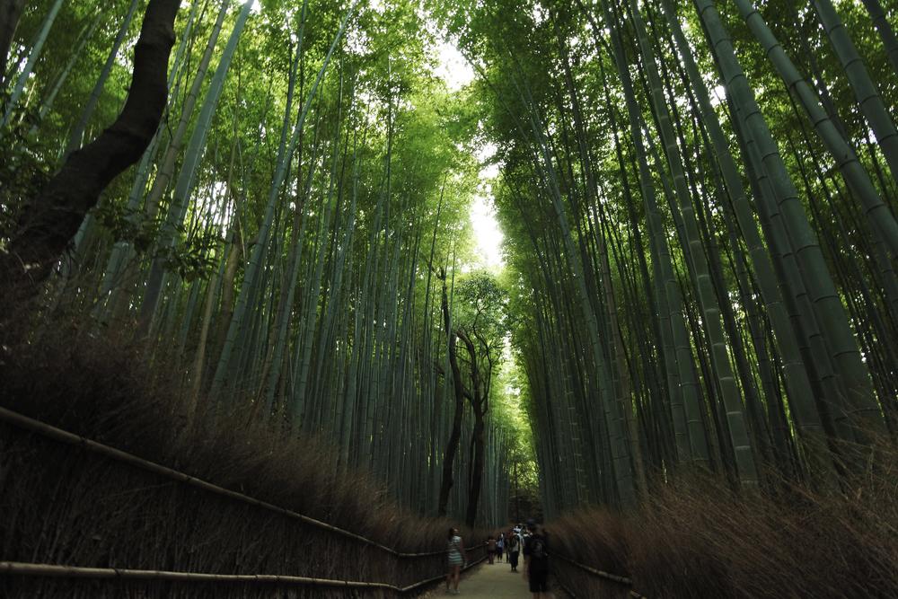 Arashiyama (嵐山) Bamboo Grove