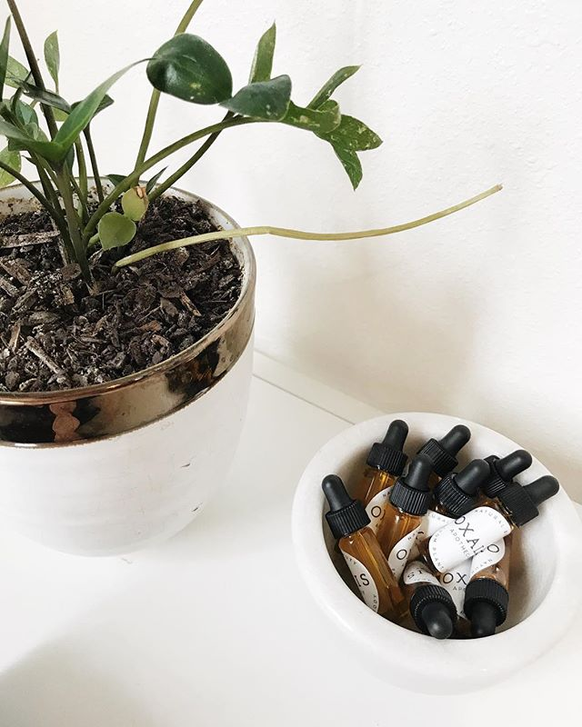 Cute studio corners 🌿 Did you know we sell our best selling Daily Glow Facial Serum in a generous sample size? This vial will last around 2 weeks, which really gives you the opportunity to see the long term results! . . .  #oxalisapothecary #planttobody #naturalbeauty #naturalskincare #cleanbeauty #greenbeauty #plantbasedskincare #nontoxicskincare #organicskincare #skincareobsessed #indiebeauty #selfcareroutine #skincareroutine #facialserum #faceoil #dailyglow #dailyglowfacialserum #healthyskin #plantbasedbeauty #glowingskin #radiantskin #serum #botanicalskincare #indiebeauty #luxuryskincare #sample #skincareproducts #skincaresamples