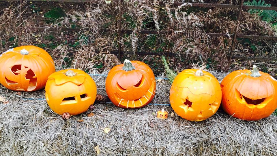 Some very impressive pumpkins!