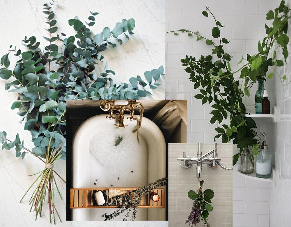 Eucalyptus - fresh herbs in shower area