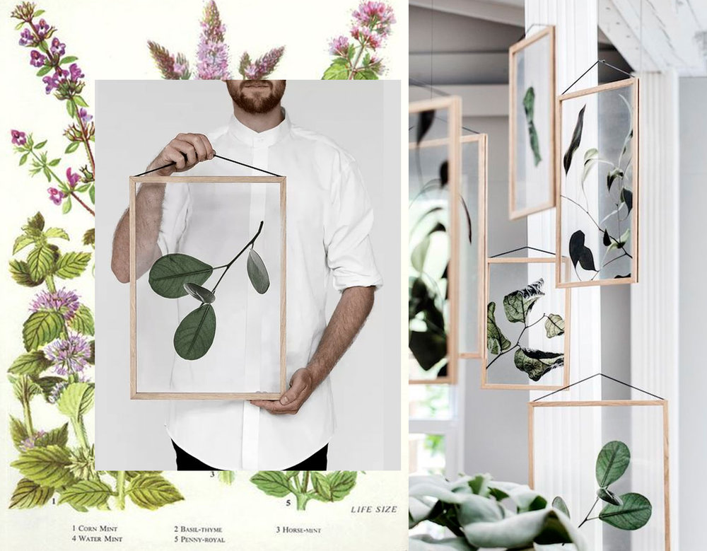 botanical print - Floating Leaves Moebe