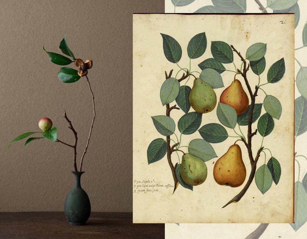 Kawase Toshiro Ikebana via Soul Hearts - botanical print Remodelaholic