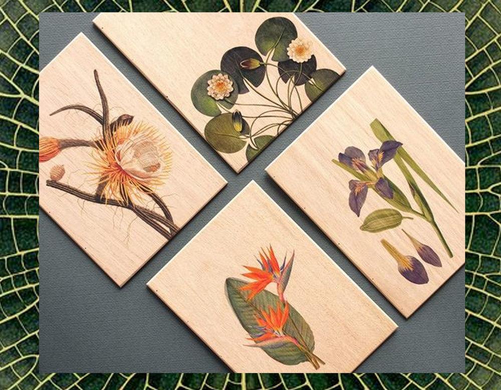 detail print waterlily via Katie Scott - prints on wood Woodish