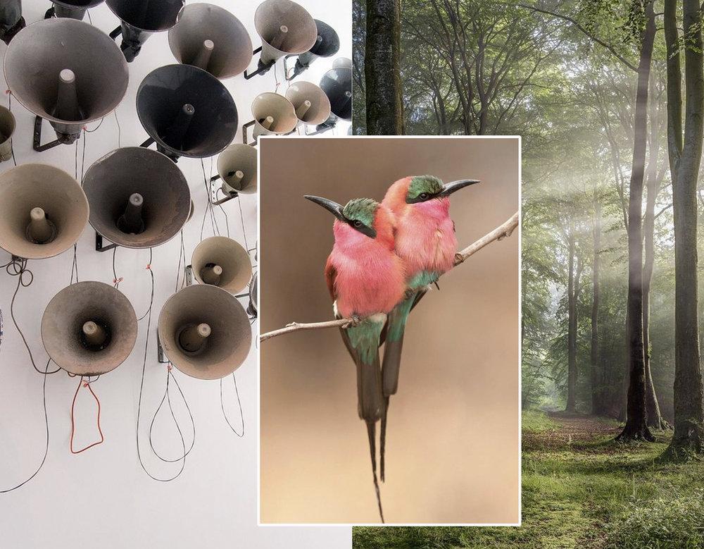 Sound Poem by Pavel Buchler via  Tanya Leighton  - picture woods via  Daily Mail  - birds via  InfoJardin