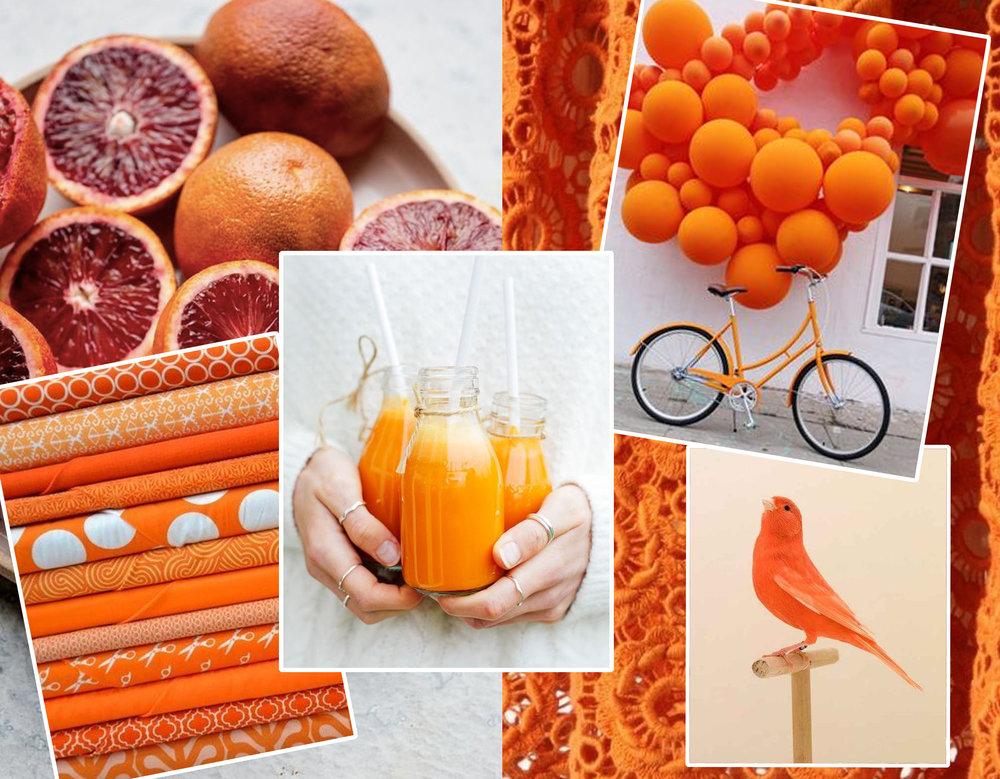 oranges via  Vegetariabventures  - little bird via  BuzzFeed  - drinks , fabrics and bicycle via  Pinterest