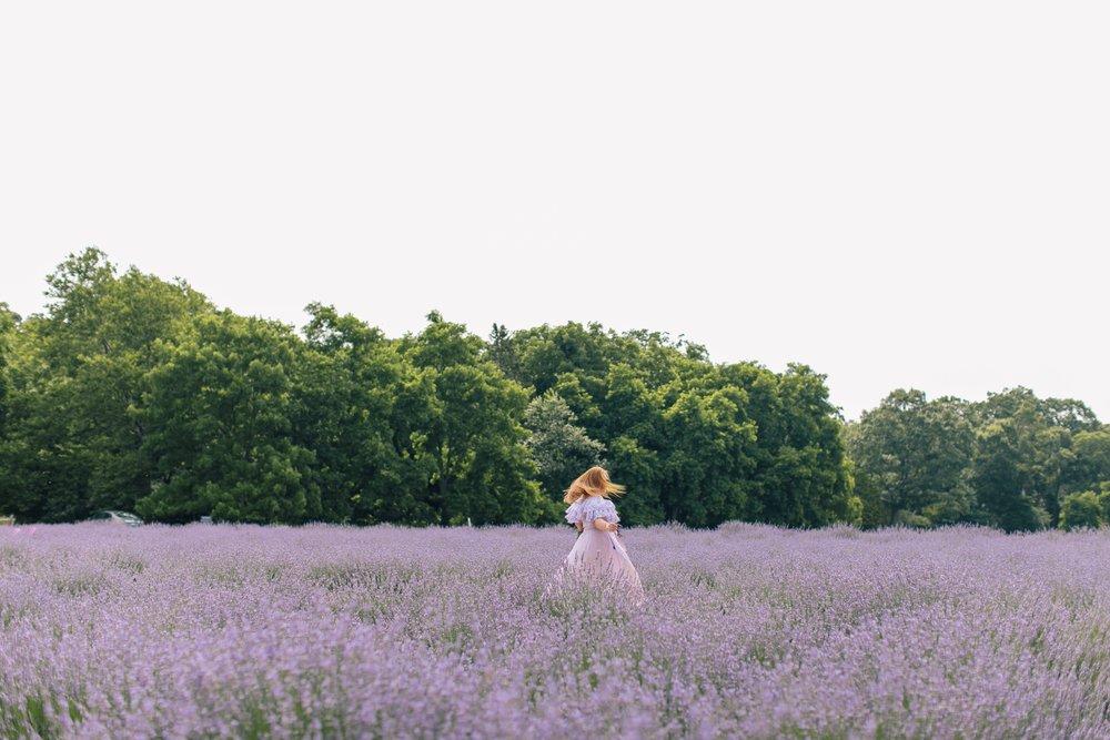 lavenderbythebay-1.JPG