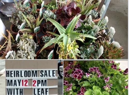 Lakewood Heirloom Plant Sale — The Olive Scene