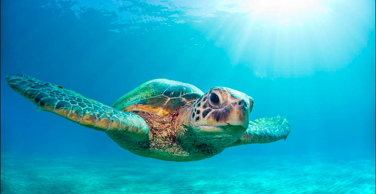 Inspirational sea turtle