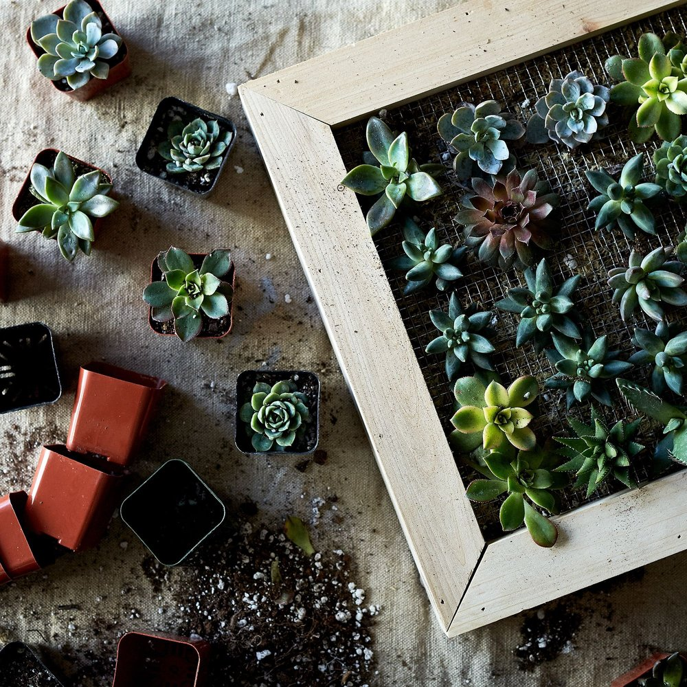 DIY Vertical Succulent Garden - From our partner, Food52.Send it to someone you know will love assembling it and caring for these little fellows OR make it yourself and present it all ready to be hung. You could even paint the frame if you felt really creative.(Image from Food52)