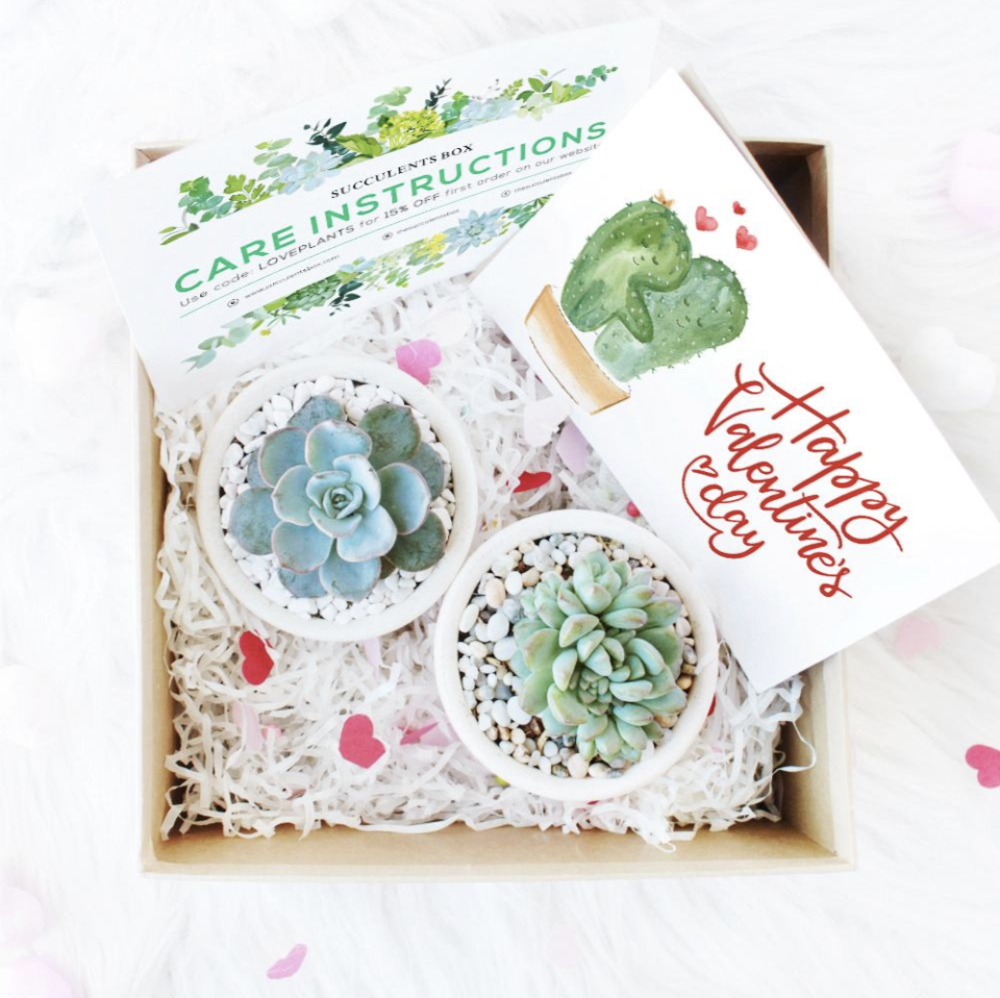2 Succulent Gift Box - From Succulent BoxSurprise a loved one this Valentine's Day with 2 adorable succulents, already potted and ready to be enjoyed.(Image from Succulent Box)