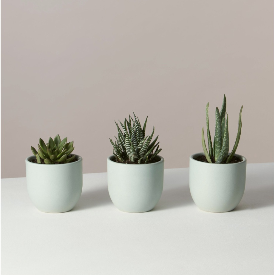 Succulent Trio - From The SillYou can select a trio in a variety of pots and in a variety of colors to find the perfect set for the recipient!(Image from The Sill)