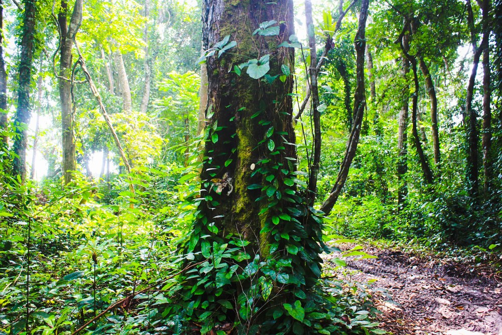 In the rainforest at Pongara National Park