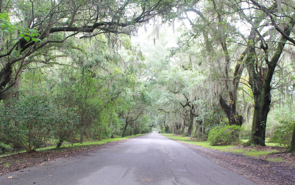 Drive to Magnolia Plantation