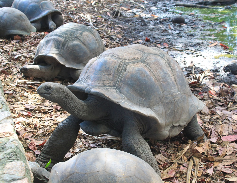 Tortoises can be found on the islands