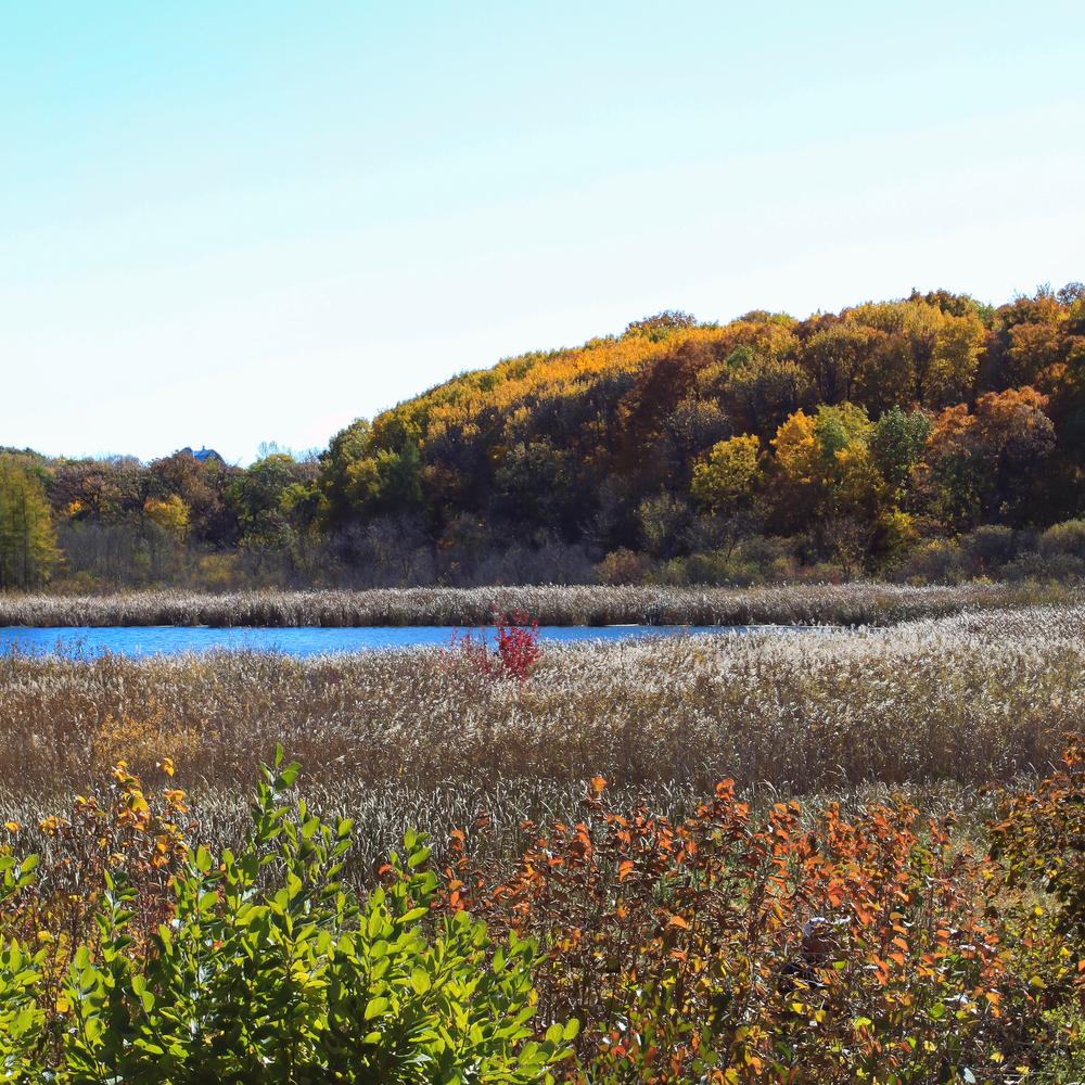 MN  Landscape Arboretum.JPG