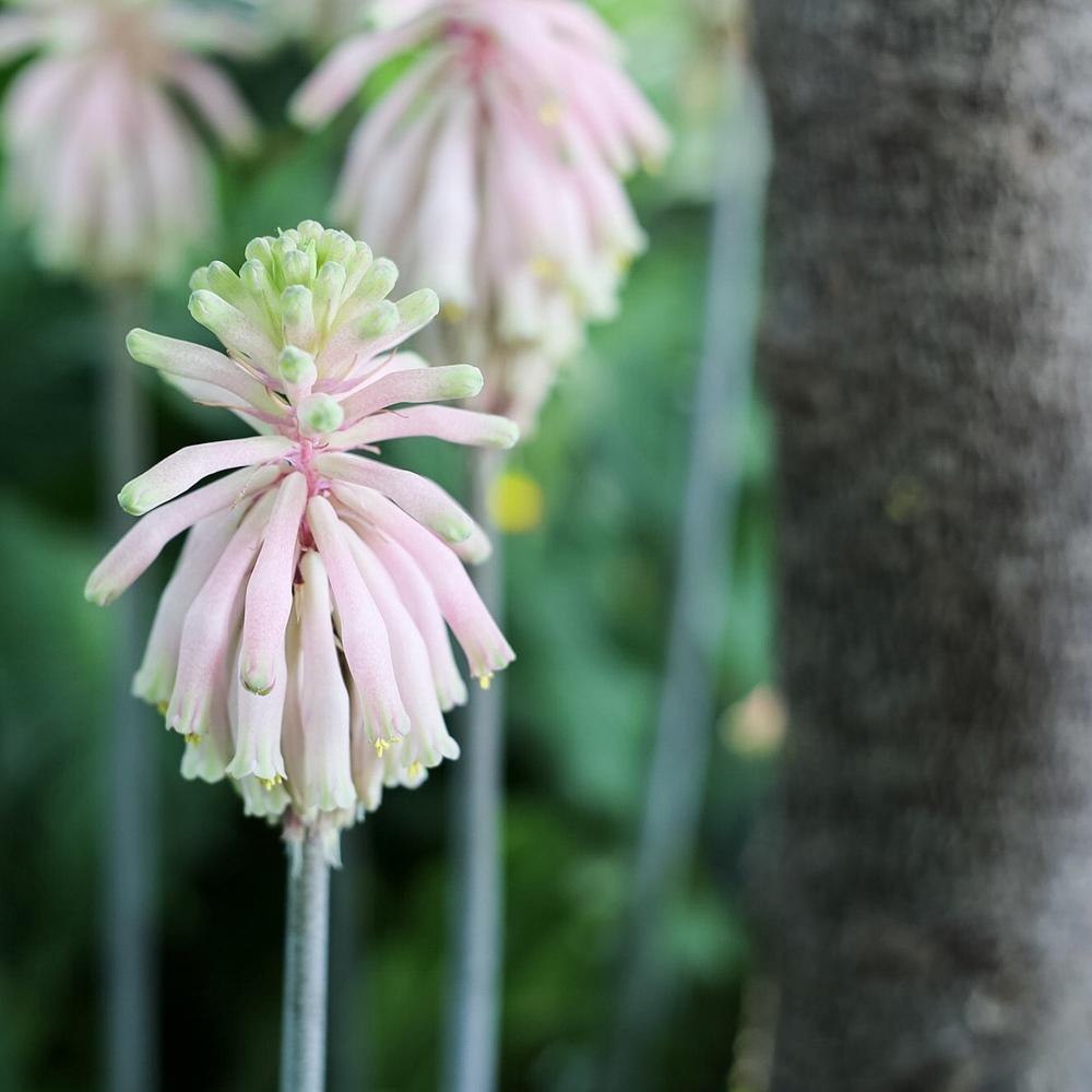 Spring Flower Show Como Conservatory