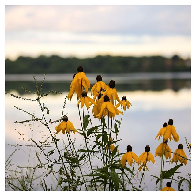 Weekend at Lake Harriet