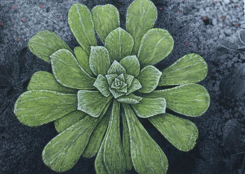 Botanic#4.jpg