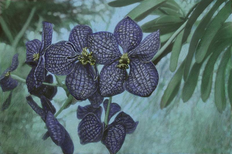 Botanic#17.jpg