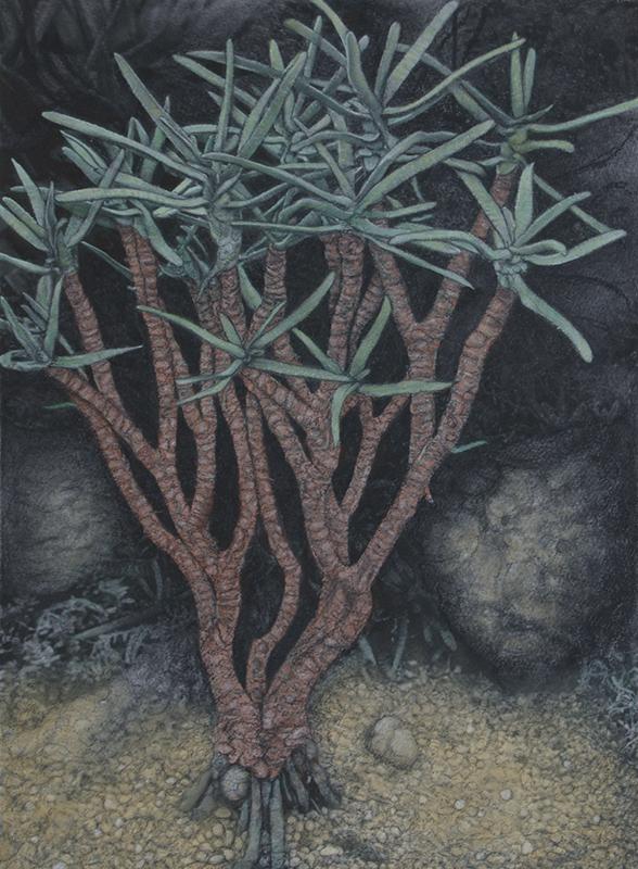 Botanic#19.jpg