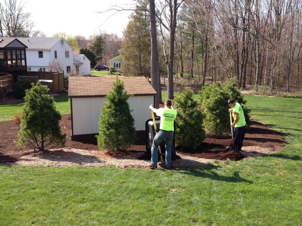 Landscapers laying mulch in a yard