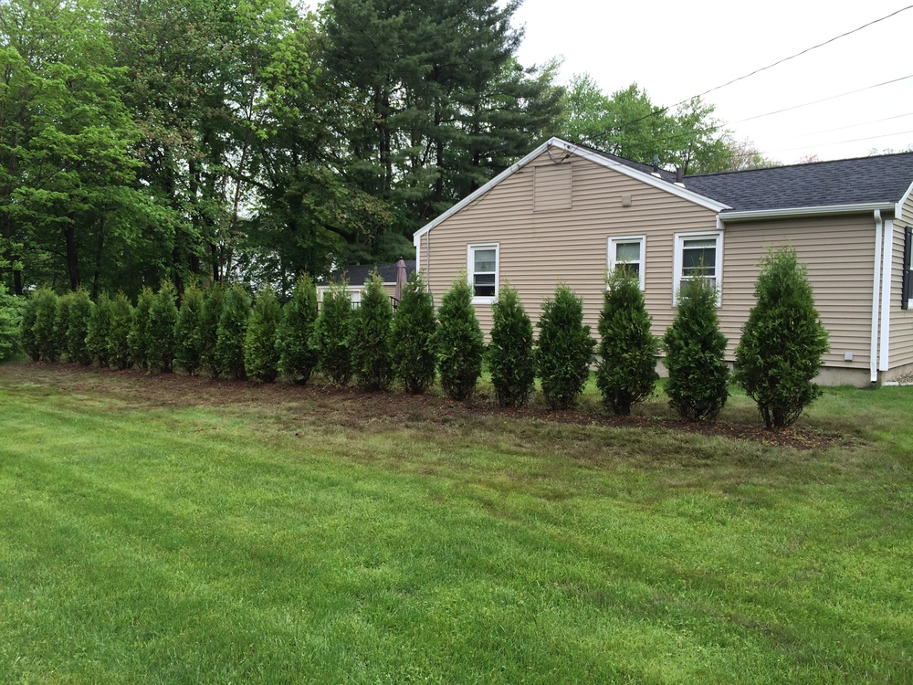 An after photo of a back yard with newly planted trees