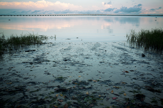 Low tide with a view of Old Tampa Bay, the Bayside Bridge beyond