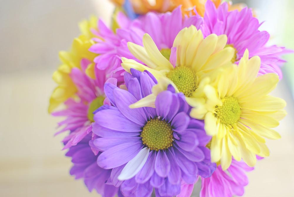 ColoredFlowers4.jpg