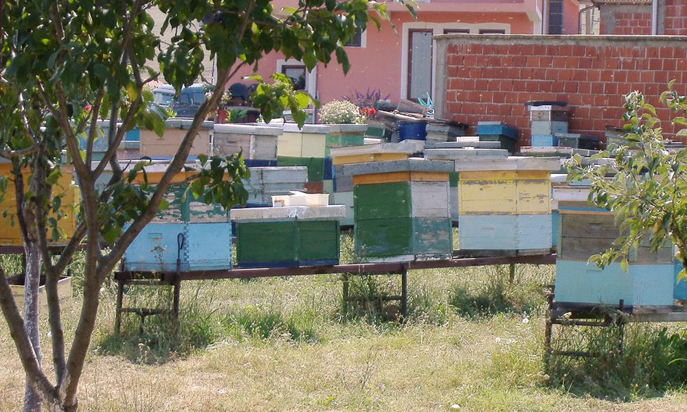 Commercial apiary,Fushë Kosovë,Kosovo