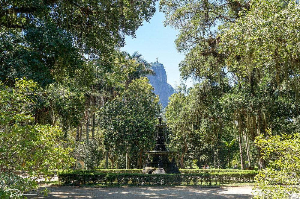 Rio's Jardim Botânico