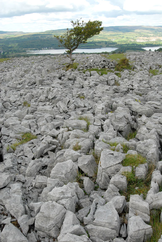 medium-062-Burren-Forest-Blacklion.jpg