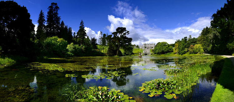 Dolphins Pond - Powerscourt Estate