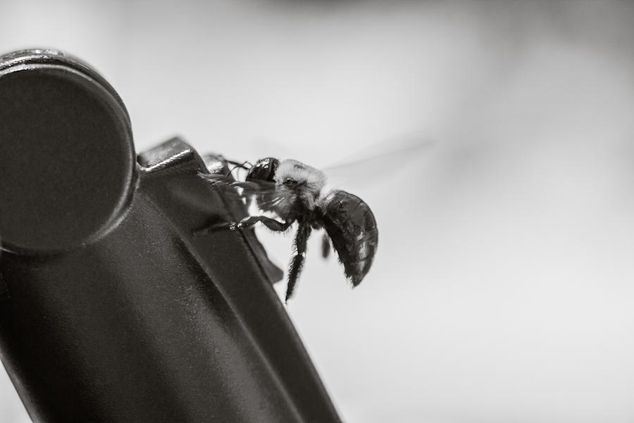 bobozeman-bee.jpg