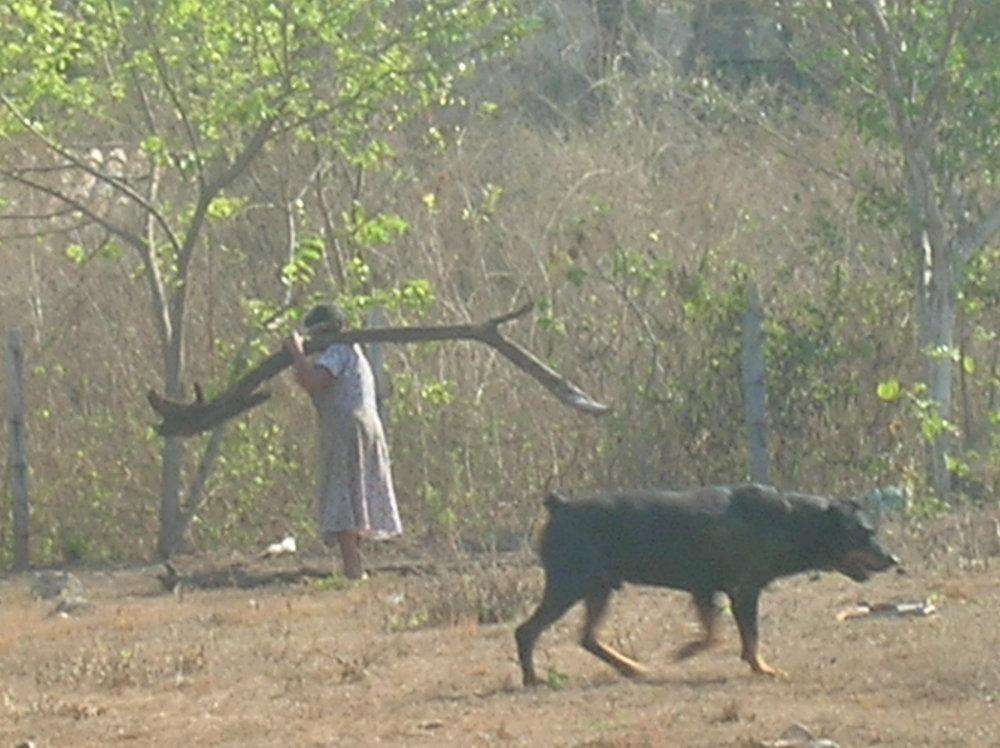 troncones woman dog log.jpg