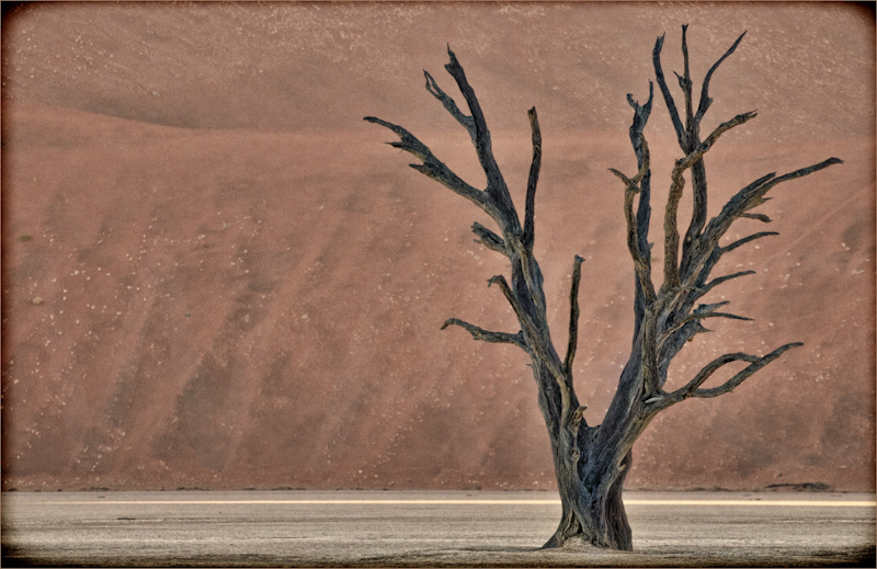 """Dunes and Tree"" by Audrey Price - HC"