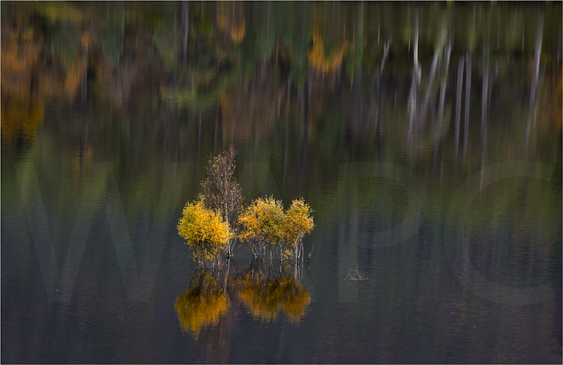 Autumn Reflections by Sue Baker-Second