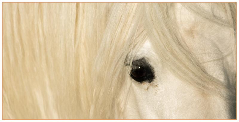 A littel Horse by Tim Growcott
