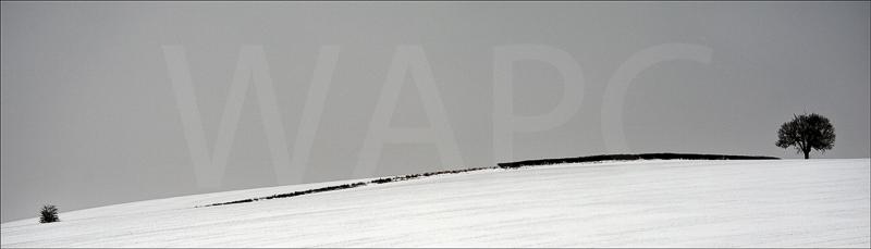 Hedgerow by Tony Thomas - C (Adv mono)