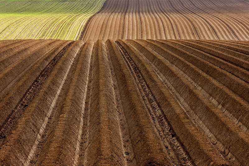 Furrows by Irene Froy - C