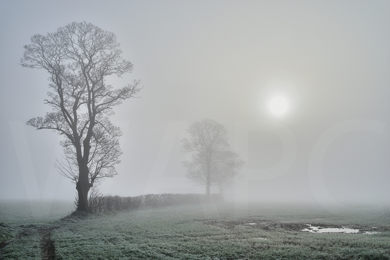 Through the Fog by Chris Lewis - HC (PDI)