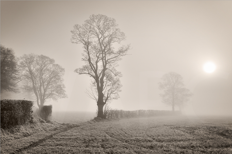 Freezing Fog by Chris Lewis - C (PRINT)