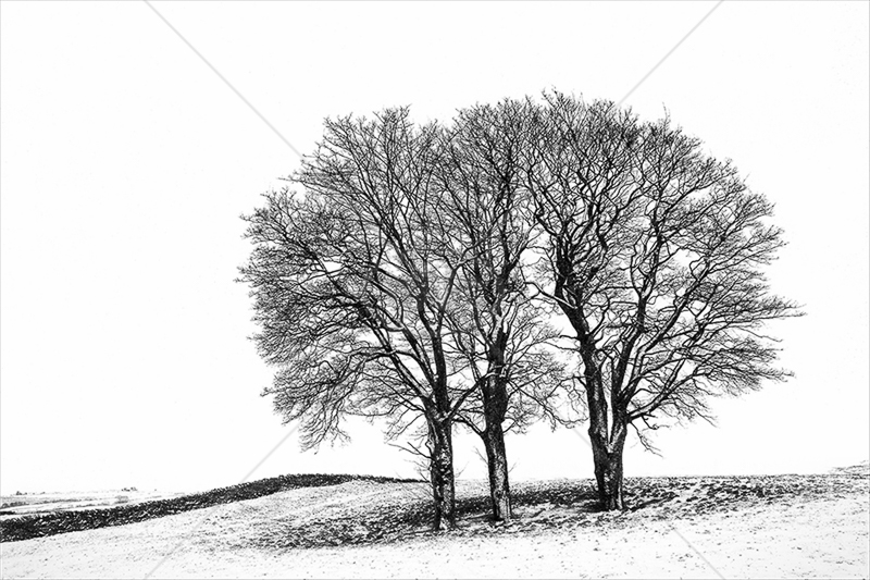 Trees with a Dusting of Snow by Norman O'Neill - C (adv mono)