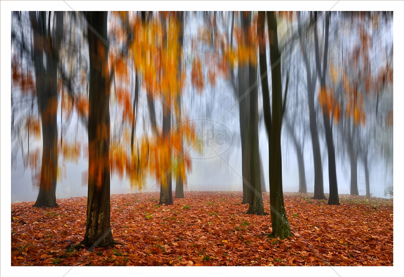 Autumn Impression by Chris Lewis - C (Adv col)