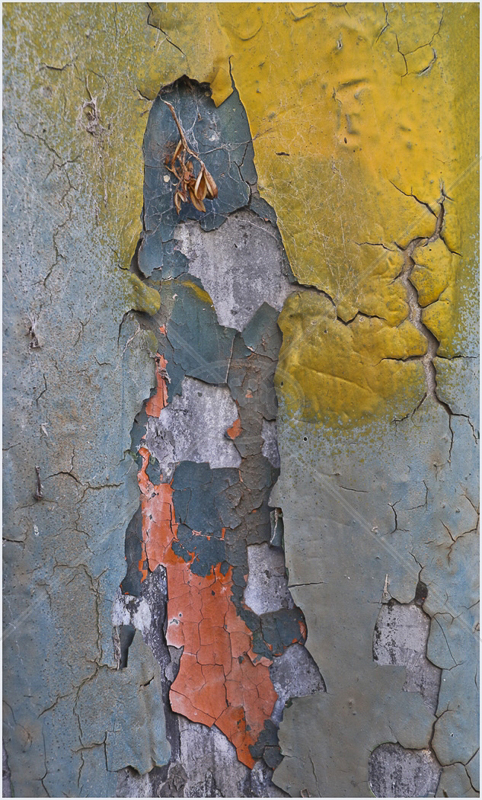 What Colour Next Time by Peter Hodgkison - C (Int)
