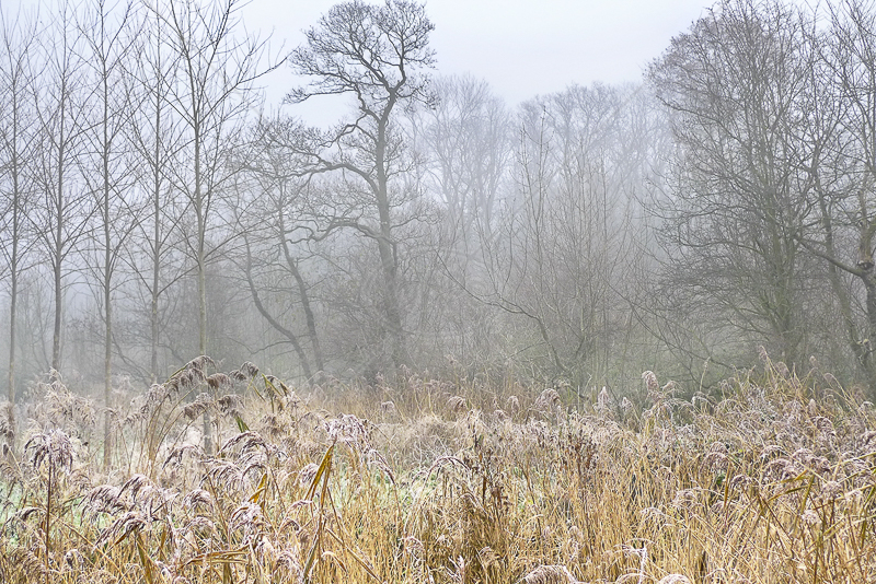 Frost and Mist by Gerry Froy - C (Int)
