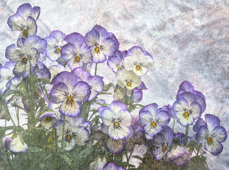 Violas by Gerry Froy - 1st (Int)
