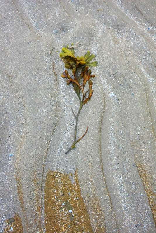 Seaweed by Rachel Owen - C