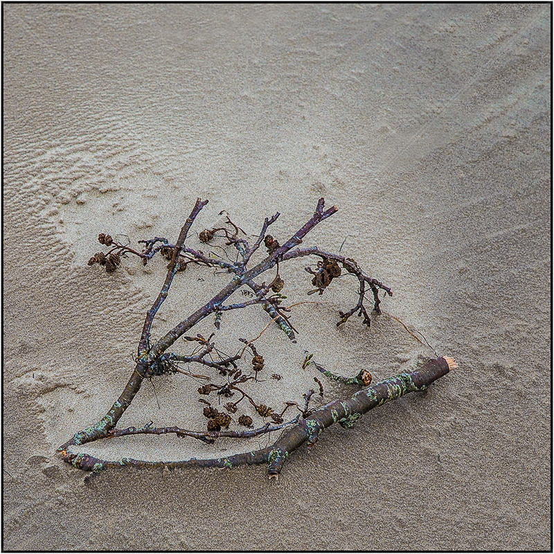 Twig and Sand by Ian Griffiths - 3rd (Int col)