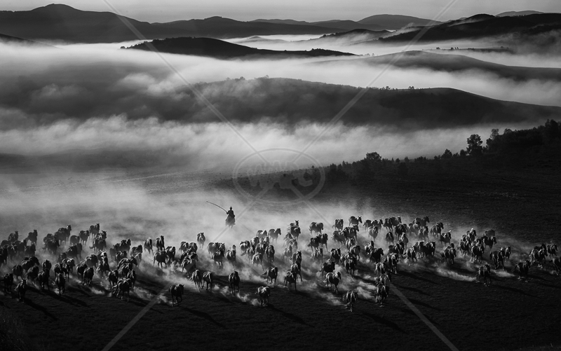 "RPS Gold medal Best landscape (mono) - ""Galloping on Air"" by Yongan Gan"