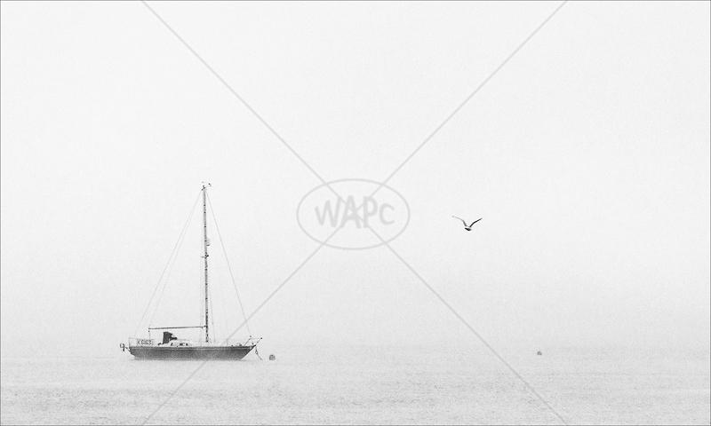 Misty Mooring by Irene Froy - C (ADV mono)